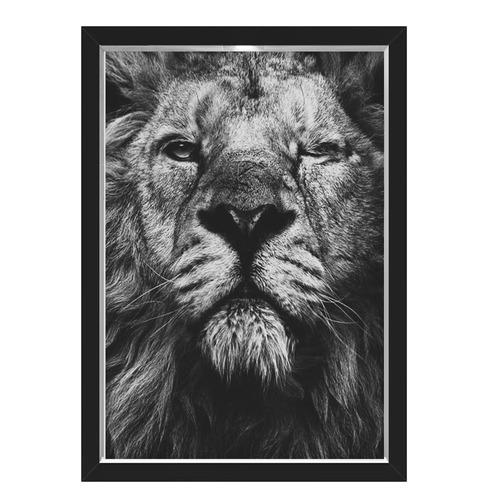 Quadro Caixa Lion Eye