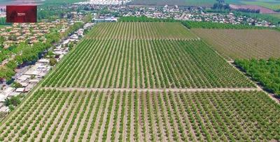 Agrícola En Venta En San Bernardo