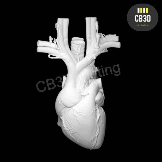 Coração Anatômico 3d