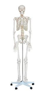 Esqueleto Humano Completo Tamaño Real