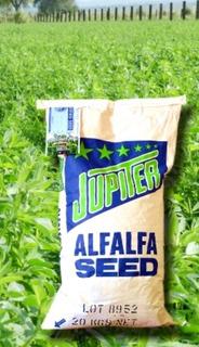 Semilla De Alfalfa Jupiter De Berentsen Presentacion De 20kg
