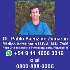 Castrar Gatos Llameme Gratis Por Whatsapp Al 1140963316