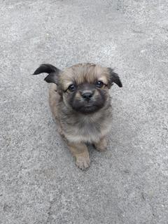 Cachorros - Perritos - Adopta Una Perrita