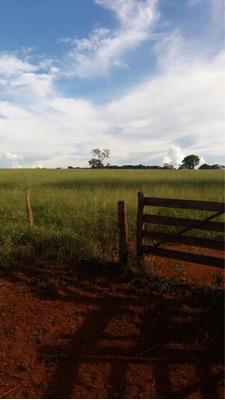 Excelente Fazenda 265 Alqueires