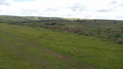 Campo Forestado De 90 Hás