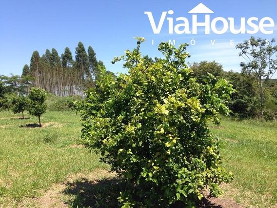 Sitio Cássia Dos Coqueiros Com 3 Alqueires - St00010 - 33753366