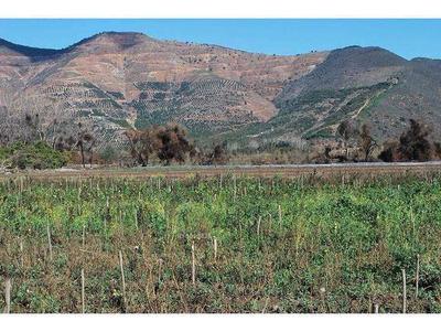 Parcela Agrícola, Plana, Derechos De Agua, Ubicación Ideal A 300 Mt De Panemericana Norte, Ruta 5.