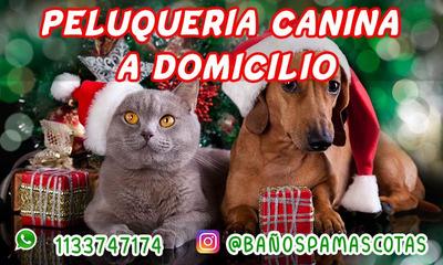 Peluquería Canina A Domicilio Perros Buenos Aires Navidad