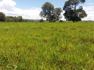 Fazenda A Venda Em Pedro Gomes - Ms (pecuária) - 997