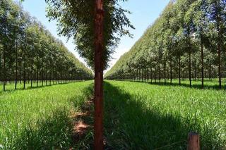 Fazenda A Venda Na Cidade De Inimutaba Em Minas Gerais - 8531