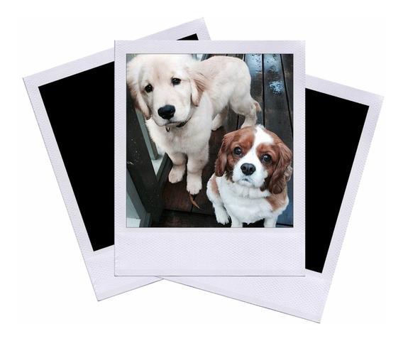Fotos Polaroide - Revelação No Formato Polaroide - 200 Fotos
