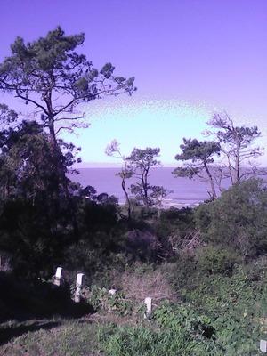 Alquilo Casa Con Vista Al Mar Y Bosque!