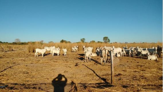 Fazenda A Venda Em Alvorada -to - 1186