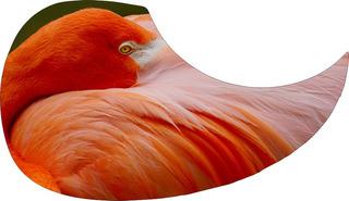 Escudo Palheteira Resinada Violão Aço Orange Flemming