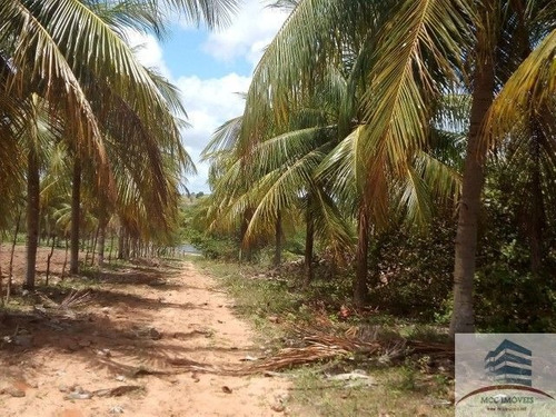 Imagem 1 de 6 de Granja A Venda Em Macaíba