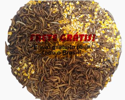 Tenébrios Gigantes 1000 Larvas + Frete Grátis + Brinde