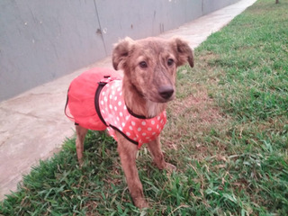 Cachorra De 6 Meses En Adopción Responsable.