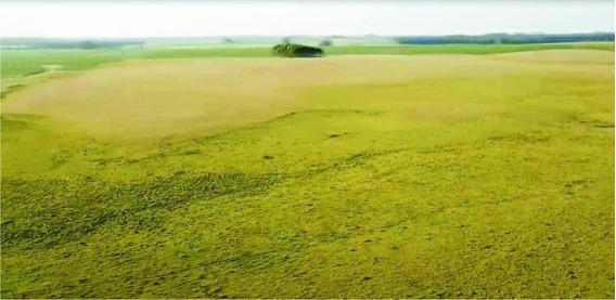 Fazenda Para Venda, Fazenda Zona Rural Interior Do Rio Grande Do Sul - R$ 20.000.000 - 36764