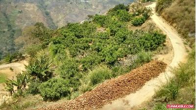 Terrenos En Venta 04149448811 Finca En El Jarilo, Miranda