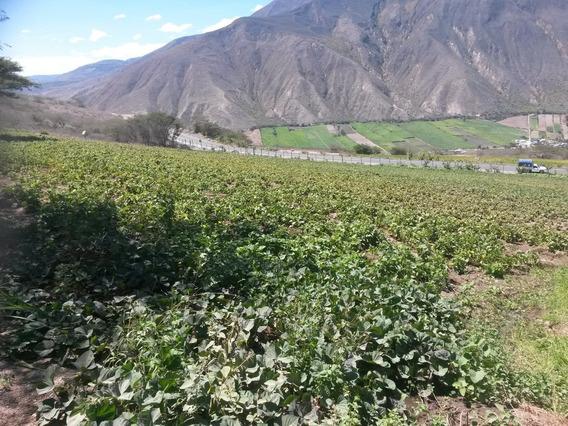 Se Vende 10 Hectáreas Cultivables En Santiaguillo - Mira