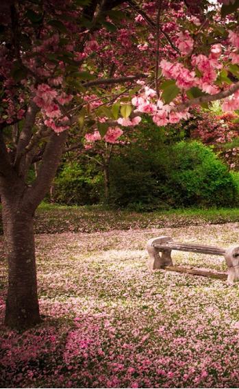 Fundo Fotográfico Gestante Jardim Rosa 1,6m X 2,6m - Gs09