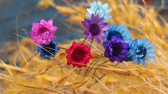 Sempre Vivas 2 Mil Flores Secas Para Casamento
