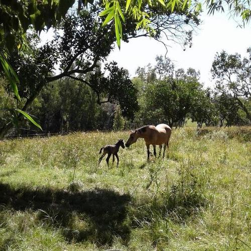 Se Vende Hermosa Chacra Con Linda Casa, Sobre Arroyo Las Cañitas, Paraje Las Cañas, Cerro Largo.