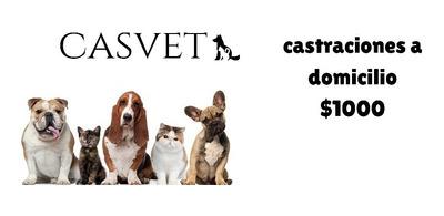 Castraciones Y Asistencia Veterinaria En El Movil