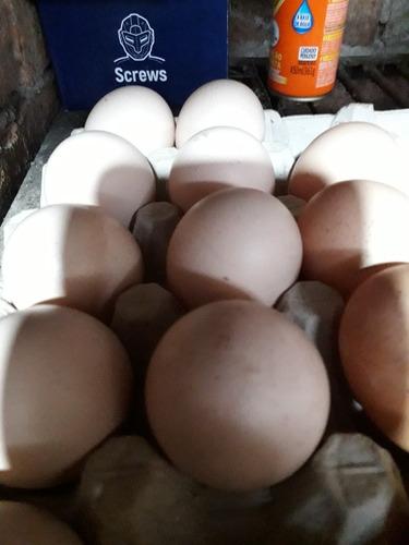 Imagen 1 de 12 de Orpington Huevos Fertiles . Y Pollitos