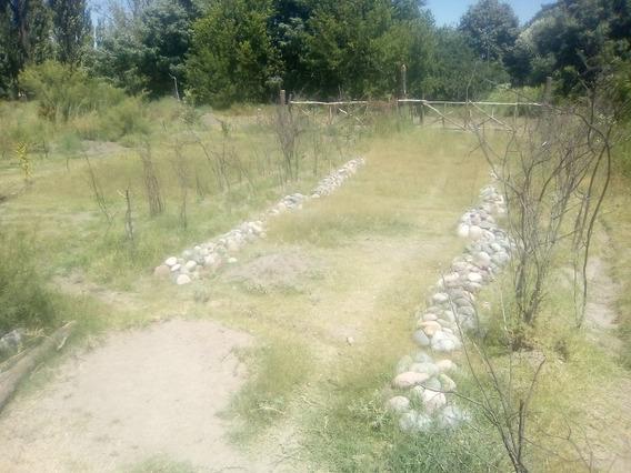 Amplio Terreno De 5 Hectáreas En San Rafael Mendoza
