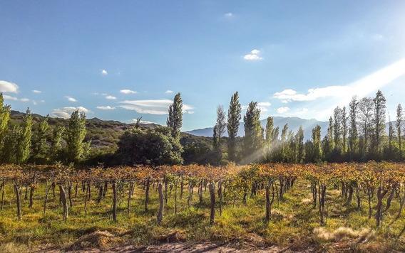 Vendo Finca Con Viñedos En San Bernardo, La Rioja