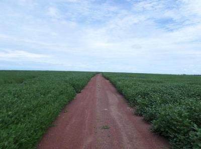 Fazenda Em Araguaçu - To, Dupla Aptidão - 266