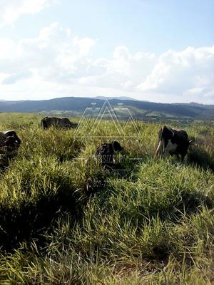 Coalición Vende Finca 3,700 Tareas Agrícola En Hato Mayor