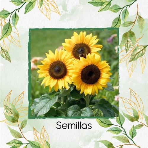 50 Semillas Flor Girasol + Obsequio Germinación