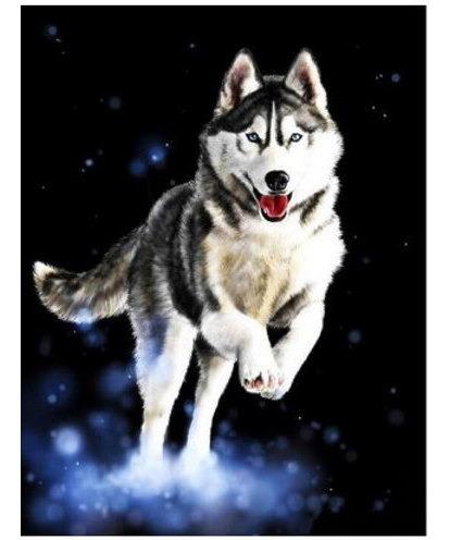 Pintura Numerada Lobo Na Neve