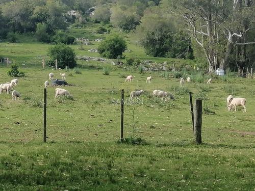 Campo En Venta 28 Hás. Paraje Salamanca.- Ref: 64111