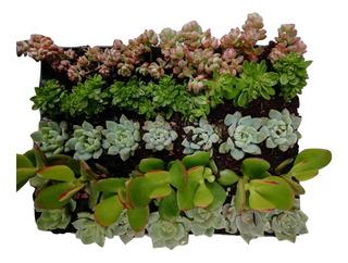 Plantas Suculentas Pequeñas
