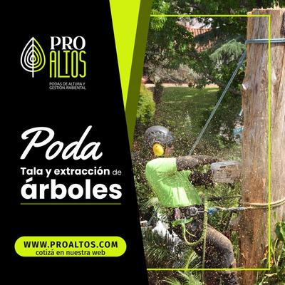 Servicio Poda Y Tala De Arboles De Altura,extracción Palmera