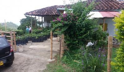 Venta De Finca Rural En Viterbo-caldas