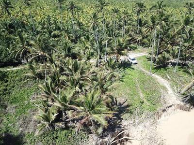 Terreno En Bavaro Punta Cana 23 Millones De Metros Con Playa