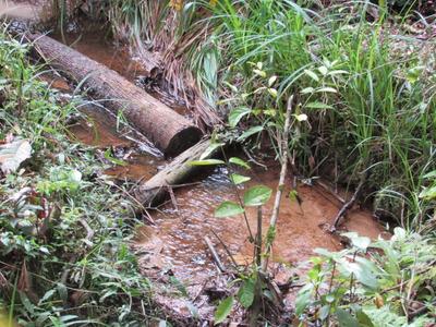 Belo Terreno Plano, Nascente, Mata E Bosque, Ref: 04662