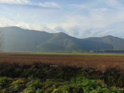 100 Hectareas En Malloa Vi Region 630