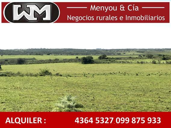 Alquiler Campo 1300has U 800has Colonia Campo Ganadero Mixto