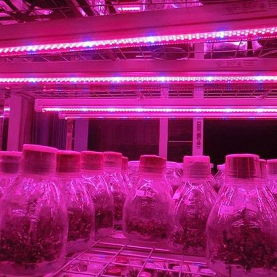 Led Full Spectrum Indoor Grow 12v Fita Flexível 2 Metros