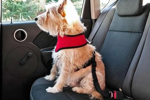 Cinturón De Seguridad Para Perro/gato Transporte En Auto