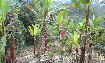 Finca 5, 5 Hectareas Con Frutas, Cacao,banano, Potreros