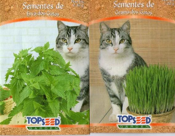700 Sementes Erva Dos Gatos+ 1000 Grama Dos Gatos Frtgratis