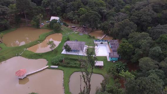 Sitio Campo Largo A 58 Km De Curitiba Excelente Investimento