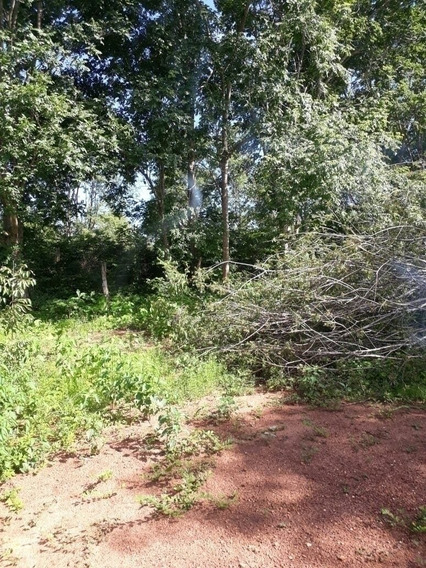 Fazenda A Venda De 90 Alqueirões Em São Valério - To (pecuária) - 1228