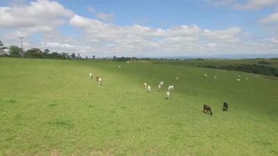 Vendo/troca Por Imoveis Fazenda No Parana ( Cod: 6018 )